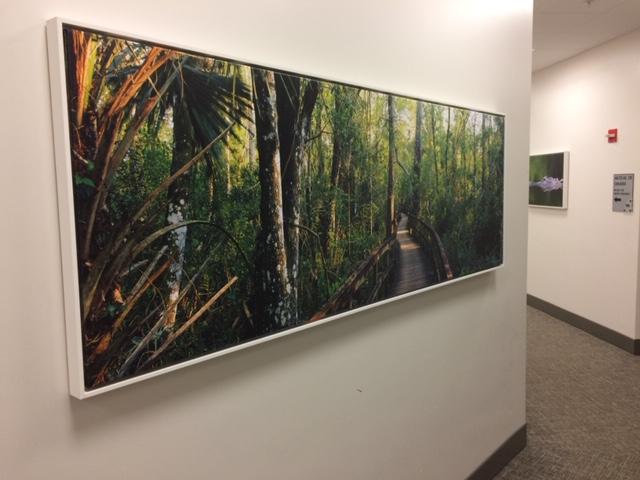 Vanderbilt Everglades 2